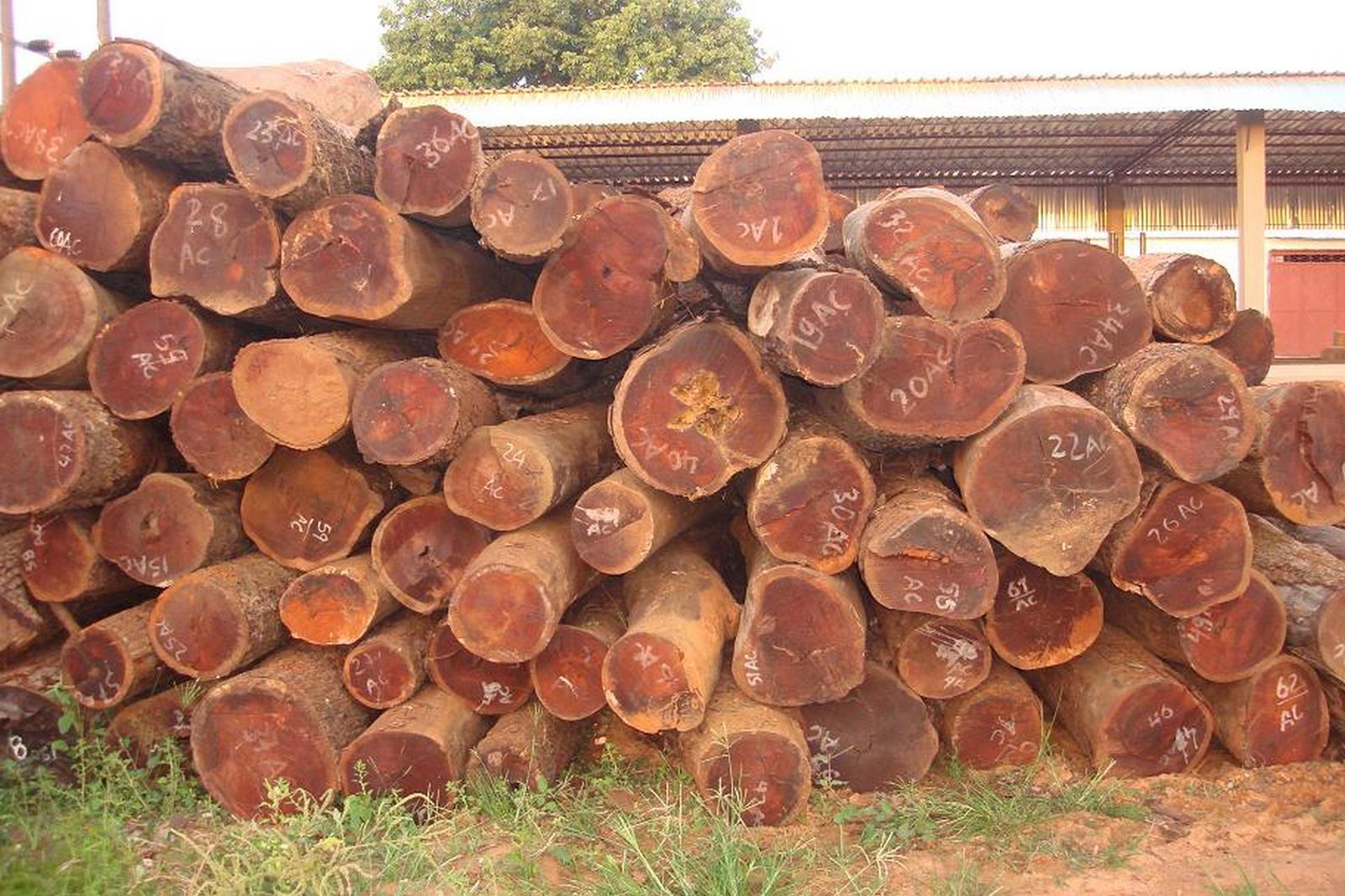gỗ hương đỏ nhập khẩu